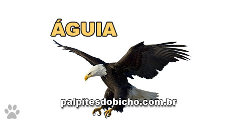 Palpites do Bicho Dia 30-08-2019